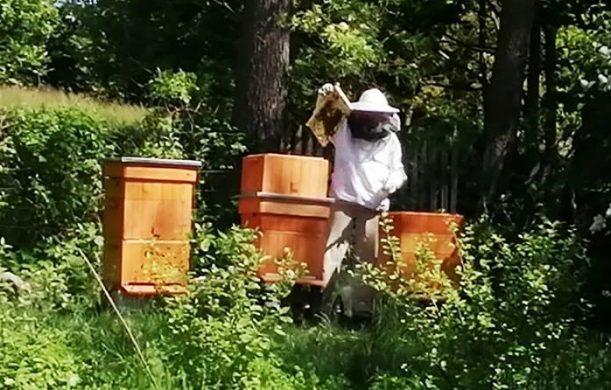 Pszczoły – początek