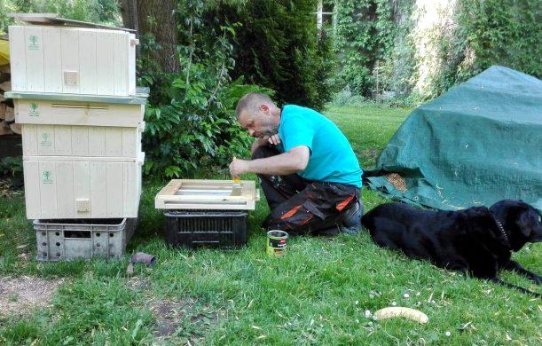 Pszczoły – przygotowania